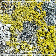 Textures. #groc #textures #nature #colors