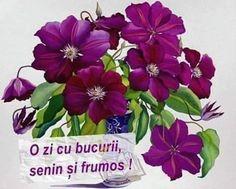 Multumi Relaxing Music, Humor, Facebook, Flowers, Plants, Travel, Calming Music, Viajes, Humour