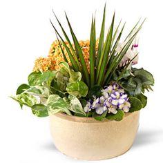 Gorgeous summer plant arrangements from Funky Petals