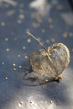 seed pod heart - found original source: ramblings from rosebank