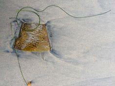 Seaweed Conversations. Photo J C R Gray