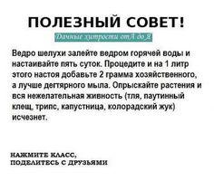 ОЧЕНЬ РЕДКО ВСТРЕТИШЬ ТАКИЕ СОВЕТЫ // Татьяна Нохрина