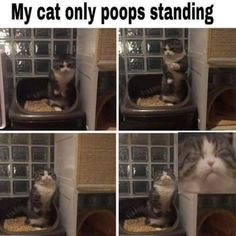 Here is a hilarious funny animal picture picdump Most of it consists of cute animals doing funny things. Some funny animal fails. Anyway, check out these 26 funny pics of funny animals. Animal Jokes, Funny Animal Memes, Cute Funny Animals, Funny Animal Pictures, Cute Baby Animals, Funny Cute, Hilarious Pictures, Meme Pictures, Top Funny