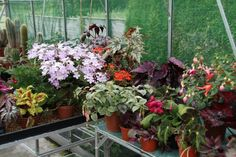 Top 7 popular greenhouse and houseplants