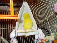 Image result for homemade cockatiel bird toys #parrotcagediy