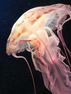 Jellyfish at the Osaka Aquarium by kevin dooley on Flickr.