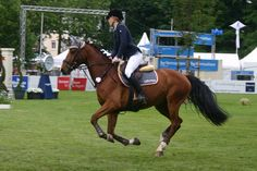 Show Jumping Stock 027 by LuDa-Stock
