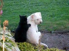 Cat massaging Dog - YouTube