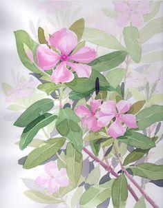 Art Flowers, Flower Art, Periwinkle Flowers, Watercolour Painting, Cartoons, Paintings, Artist, Plants, Ideas