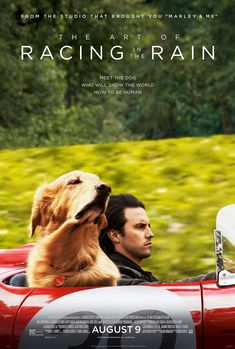 The Art of Racing in the Rain Directed by Simon Curtis. With Kevin Costner, Amanda Seyfried, Milo Ventimiglia, Martin Donovan. A dog named Enzo recalls the life lessons he has learned from his race car driving owner, Denny. Kevin Costner, Milo Ventimiglia, Christopher Robin, Streaming Vf, Streaming Movies, Venom Film, The Rain Movie, Stephen Lang, Coyote Ugly