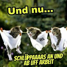 Wenn ich morgens so niedlich motiviert werde… - Animaux dessin,Animaux sauvages,Animaux drole,Animaux tatouage, Funny Animal Fails, Funny Animal Photos, Funny Fails, Funny Photos, Funny Animals, Cute Animals, Funny Animal Videos, Videos Funny, Morning Humor