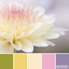 Nature inspires us in all sorts of ways. We look to nature for design and color inspiration. Nature has an amazing way of combining colors that are harmonious and pleasing to the eye. In this Trend Letter we developedour color palettes from nature. The latest trends and style inspiration from us to you .. Friend …
