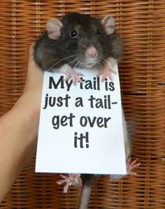 An Adorable Campaign For Rats AsPets...I had a pet rat.  He was fantastic!  :-)