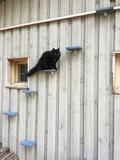 Cat stairs Cat Stairs, Cool Photos, My Photos, I Am Awesome, Cats, Photography, Gatos, Photograph, Fotografie