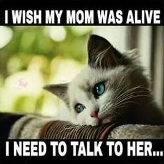 Momma loved her cats. Miss you Mom.