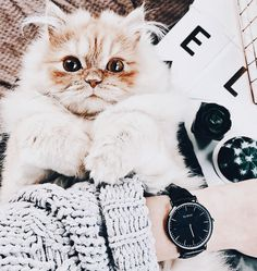 Pinterest >> Bailey DeGroot Baby Animals, Cute Animals, Pretty Cats, Pretty Kitty, Gift From Heaven, Two Faced Cat, Cute Little Baby, Animal Party, Cat Gif