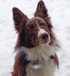 My Molly Girl loving the snowfall