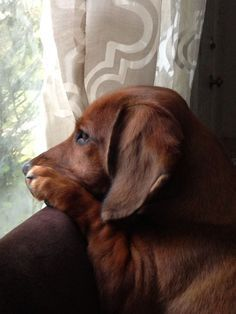 What a soulful little face - longing for someone to come home...