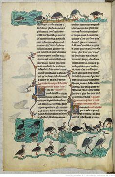 FRÉDÉRIC II , traité de fauconnerie , traduction française, faite à la demande de Jean, sieur de Dampierre et de Saint-Dizier, et de sa fille Isabelle. Date d'édition : 1201-1300 Français 12400 Folio 13v