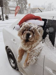 Ho ho ho now I'm cold. But it was fun though Puppies chow chow Animals And Pets, Baby Animals, Cute Animals, Perros Chow Chow, Chow Chow Puppies, Cute Puppies, Cute Dogs, Christmas Aesthetic, Christmas Mood