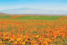 State flower thrives on and around family's Antelope Valley ranch. For more destination ideas, visit www.californiabountiful.com