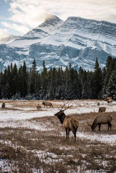 All the best of Banff — Chlobe Trotter - Peter Meister - Nature travel Best Of Banff, Image Nature, Nature Nature, Wild Nature, Adventure Is Out There, Oh The Places You'll Go, Nature Pictures, Scenery Pictures, Funny Pictures
