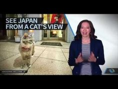 CAT STREET VIEW by IS&BBDO for Onomichi city tourism campaign. It is a google street view app that shows the sites from a cat's view. Onomichi is known by its cats and there's even a place called the Cats Alley. August 2016 the app received Gold at the Appis Awards APAC.