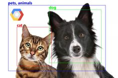 Pet Dogs, Dog Cat, Test Image, Machine Learning Models, Computer Vision, Make You Smile, Your Image, Game Changer, Tags