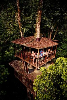 Tree House - Finca bellavista