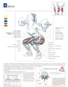 Met squatten pak je grootste spiergroep aan die aanwezig is in je lichaam, namelijk de benen.