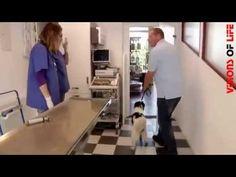 Tierarztpraxis Dr. Volz | Hausbay Im Haupthaus des Hofes Baybach ist die Tierarztpraxis Dr. Volz eingerichtet, die von der Tierärztin Dr. Simone Volz geführt wird. Ergänzend hierzu bietet das auf dem Hof befindliche Tierhotel Fellissimo hervorragend für die Rekonvaleszenz von Tieren nach Operationen an.  2011 wurde durch VISIONS OF LIFE | marketing & pr für die Tierarztpraxis Dr. Volz und für das Tierhotel Fellissimo jeweils ein Unternehmensvideo produziert.