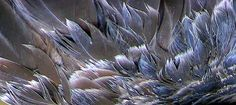 Feather Study Feather, Study, Photos, Image, Quill, Studio, Pictures, Studying, Feathers