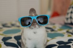 the coolest bunny in town