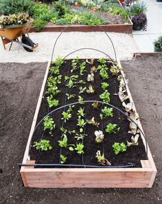 Gardening For Beginners Step-by-Step: Build the Ultimate Raised Bed - Sunset Magazine - Use these DIY instructions to make your own planting box for veggies Raised Garden Bed Plans, Building A Raised Garden, Raised Beds, Backyard Projects, Backyard Ideas, Modern Backyard, Garden Projects, Diy Projects, Garden Boxes