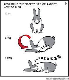 The Secret Life of Rabbits. A Tumblr comic!!!!!