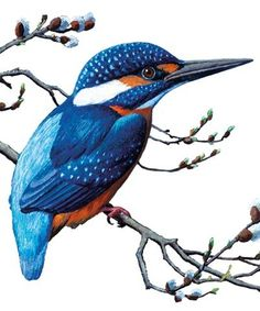 Common Kingfisher | Archivist Gallery