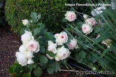 Madżenie ogrodnika cz. aktualna - strona 1623 - Forum ogrodnicze - Ogrodowisko