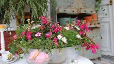 Inred din veranda med stil   Strömsös trädgård   svenska.yle.fi Floral Wreath, Garden, Plants, Decor, Cactus, Creative, Floral Crown, Garten, Decoration