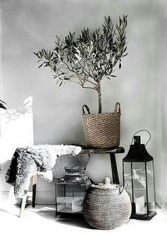 Olive trees grow only in Mediterranean