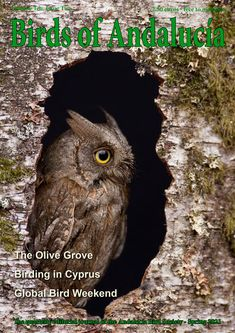 Our Spring edition featured this wonderful Scop's Owl. Andalucia, Owl, Birds, Spring, Animals, Animales, Animaux, Owls, Bird