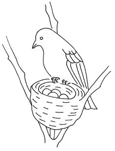 bird and nest | Flickr - Photo Sharing!