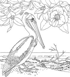 Free Printable Coloring Page...Louisiana State Bird and Flower, Brown Pelican, Magnolia, educational printables