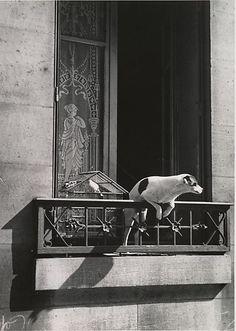 André Kertész. The Concierge's Dog, Paris, 1929