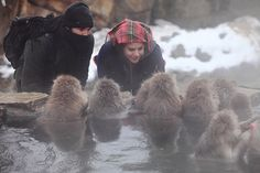 snow monkeys! Nagano, Japan