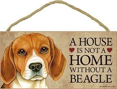 Beagles ♥ wish my parents understood..