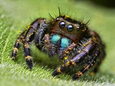 arachnids eyes insects macro pollen