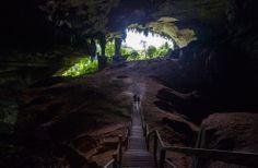niah great cave, niah national park, borneo