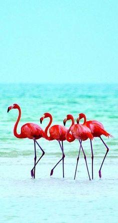 Flamingos on the beach at Isla Holbox Island, Mexico Pretty Birds, Beautiful Birds, Animals Beautiful, Animals And Pets, Cute Animals, Tier Fotos, Pink Flamingos, Belle Photo, Beautiful Creatures