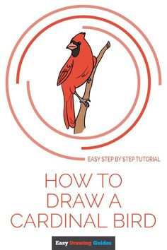Learn to draw a cardinal bird. This step-by-step tutorial makes it easy. Kids and beginners alike can now draw a great looking cardinal. Easy Drawing Tutorial, Girl Drawing Easy, Girl Face Drawing, Easy Drawing Steps, Step By Step Drawing, Easy Drawings For Beginners, Drawing Tutorials For Kids, Art Tutorials, Bird Drawings