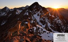 Gorgeous mountain sunrise - Jeff Horvat  --via our #ShareYourAdventure photo contest. Submit your photos here: http://stp.me/SYAPContest